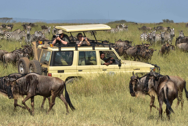 Safari tanzanie à la découverte d'un nouveau monde